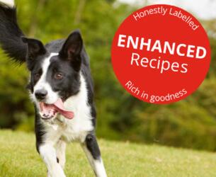 Kundenreferenz OSCAR Pet Foods
